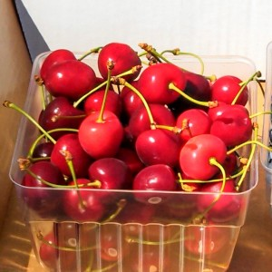 Cherries pre-picked